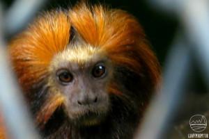 Guapimirim abriga o Centro de Primatologia do Rio de Janeiro