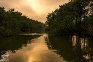 APA de Guapi-Mirim, a Arca de Noé da Baía de Guanabara
